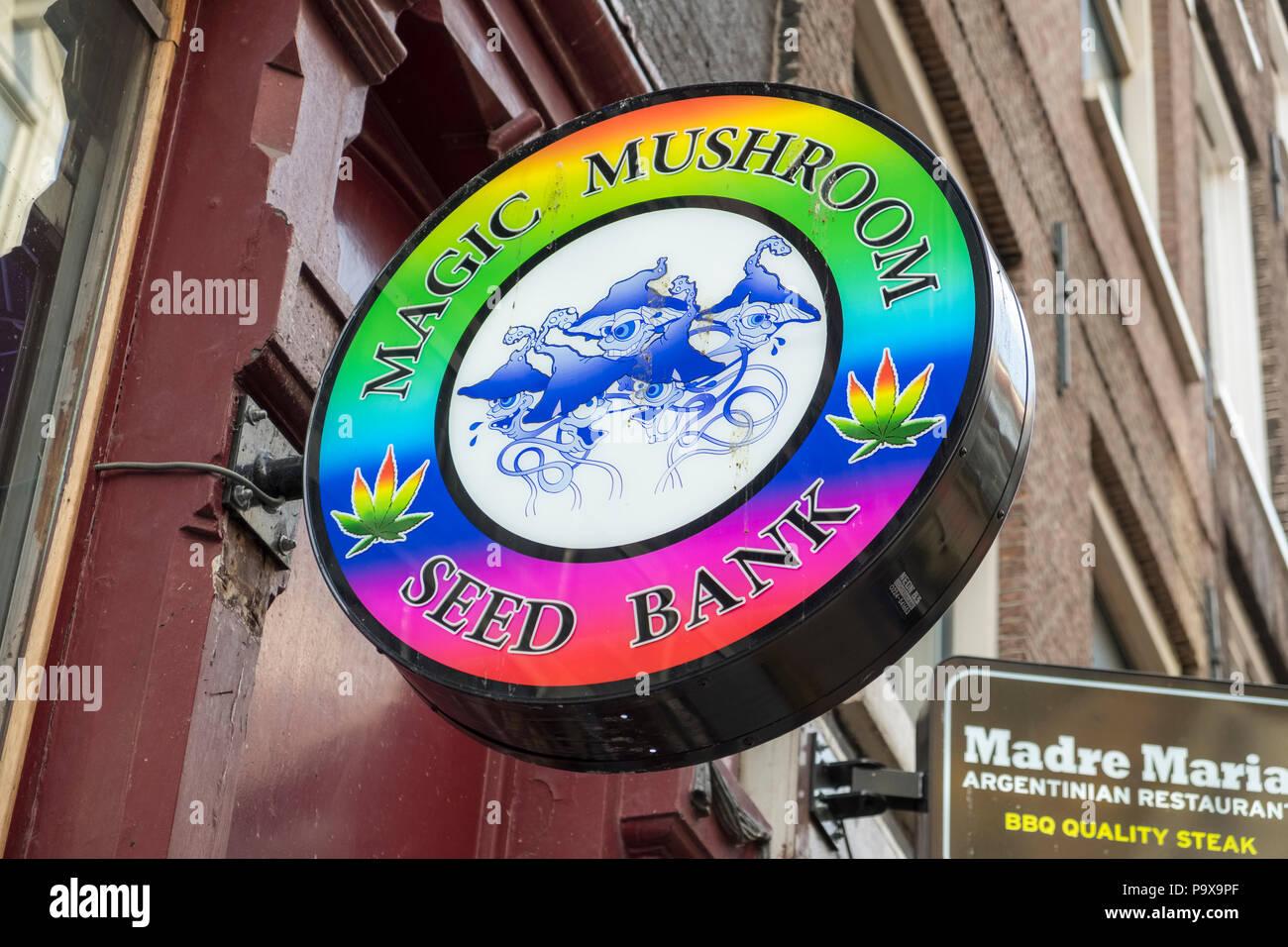 Las drogas recreativas almacenar signo, Magic Mushroom Banco de semillas, Amsterdam, Países Bajos, Holanda, Europa Imagen De Stock
