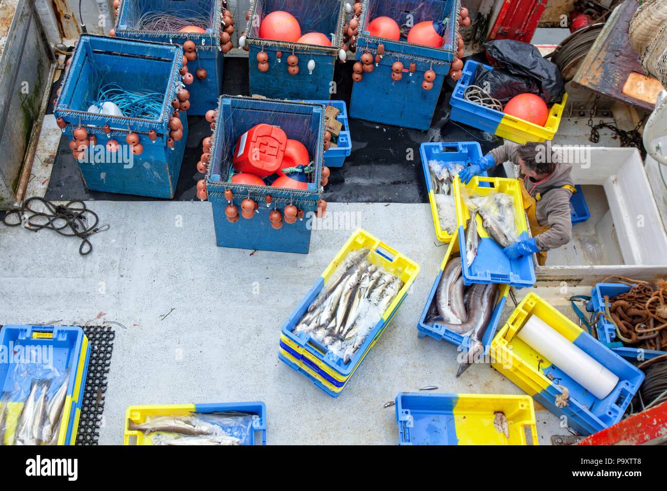 El puerto pesquero de Keroman uno de los mayores puertos pesqueros en Francia, este puerto está listo para todos los tipos de pesca todo el año. Lorient, Keroman, la base de submarinos, Bretaña, Francia. Imagen De Stock