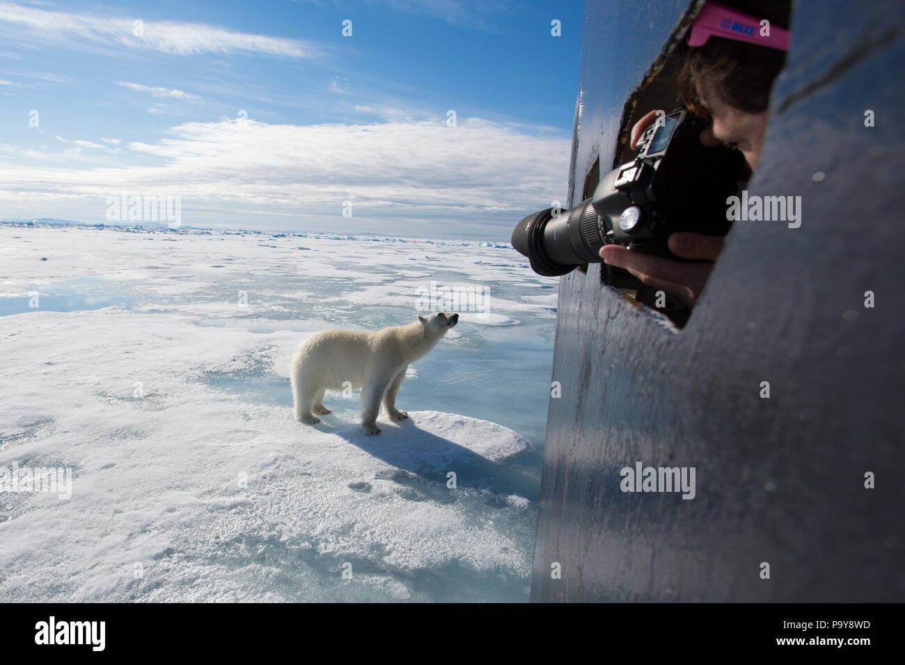 Un oso polar se aproxima a un barco turístico en el Océano Ártico, fotografiado por una mujer en una distancia cercana. Foto de stock