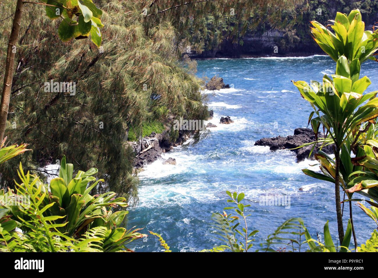 Mirar a través de pinos y árboles de yuca y helechos hasta el Océano Pacífico en la Bahía Onomea en Papaikou, Hawai Foto de stock