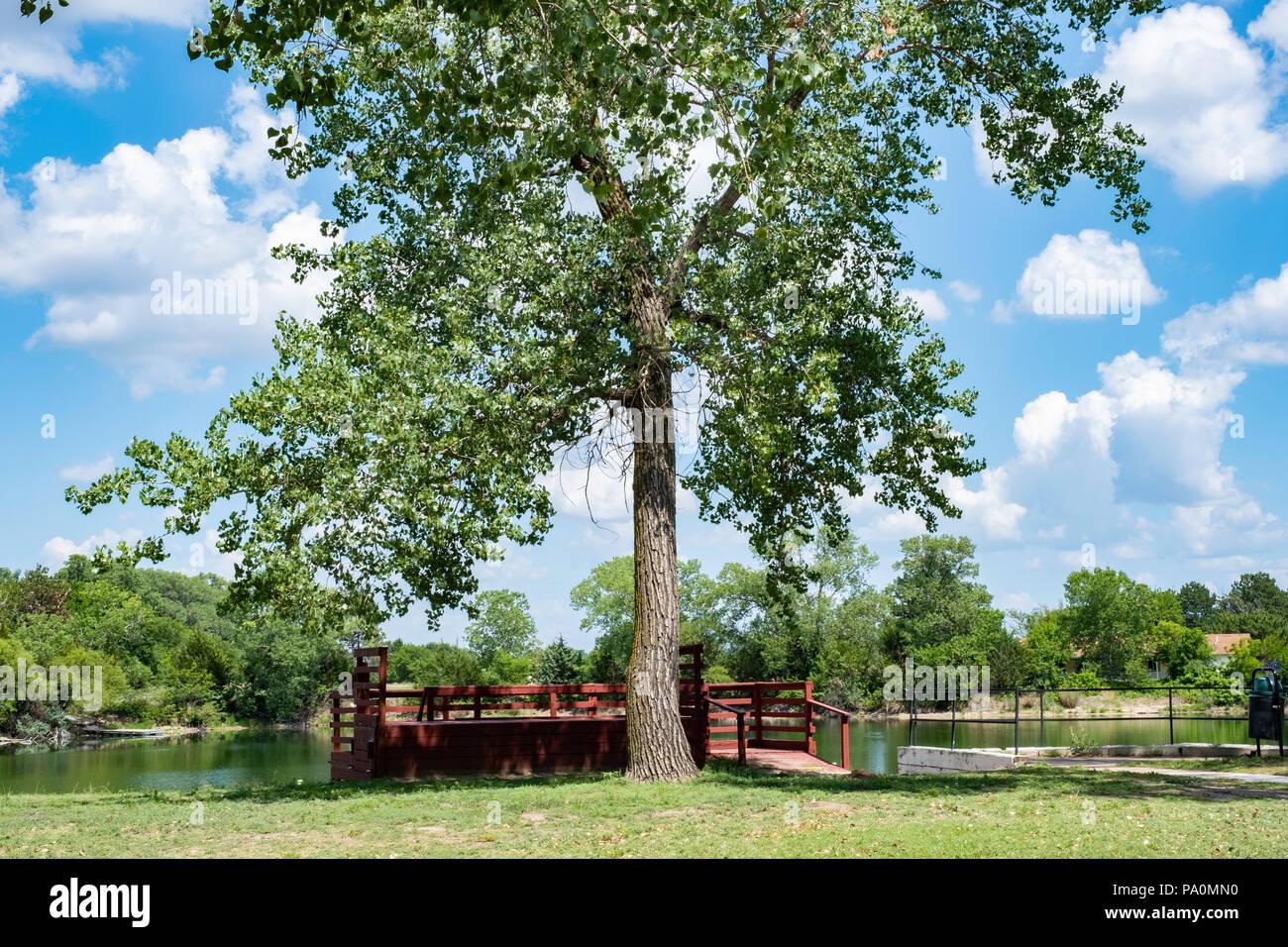 Populus Deltoides Imágenes De Stock & Populus Deltoides Fotos De ...