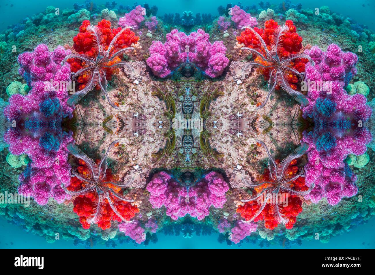 Caleidoscopio de arrecifes de coral. Foto de stock
