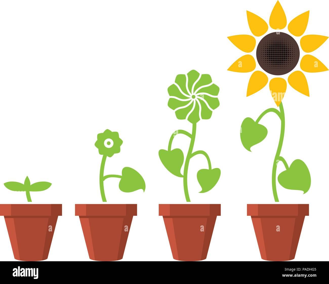 Etapas De Crecimiento De Plantas De Girasol Vector Concepto