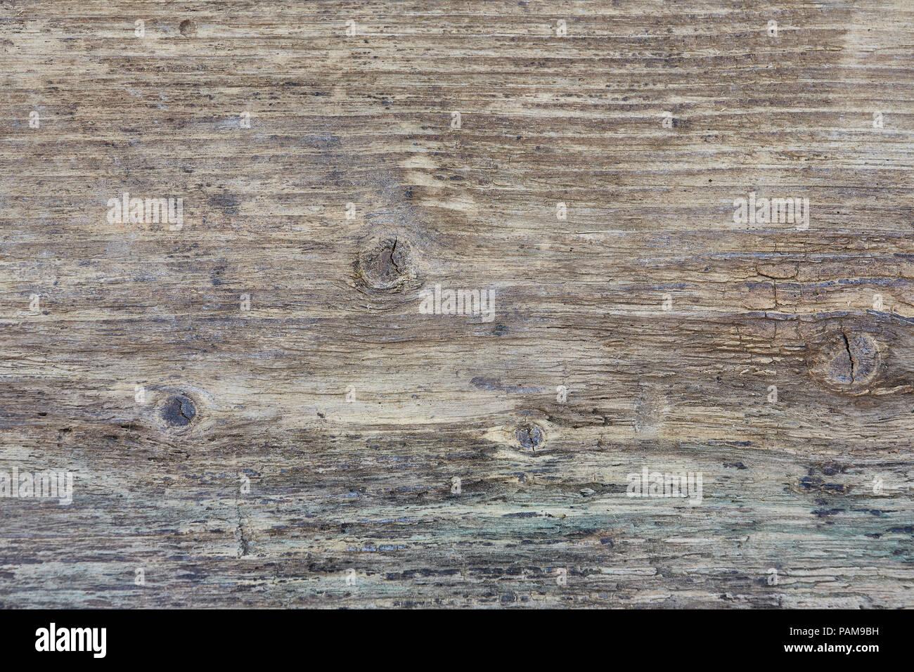 Un fotograma completo de cerca de un trozo de pino antiguo que tiene ...