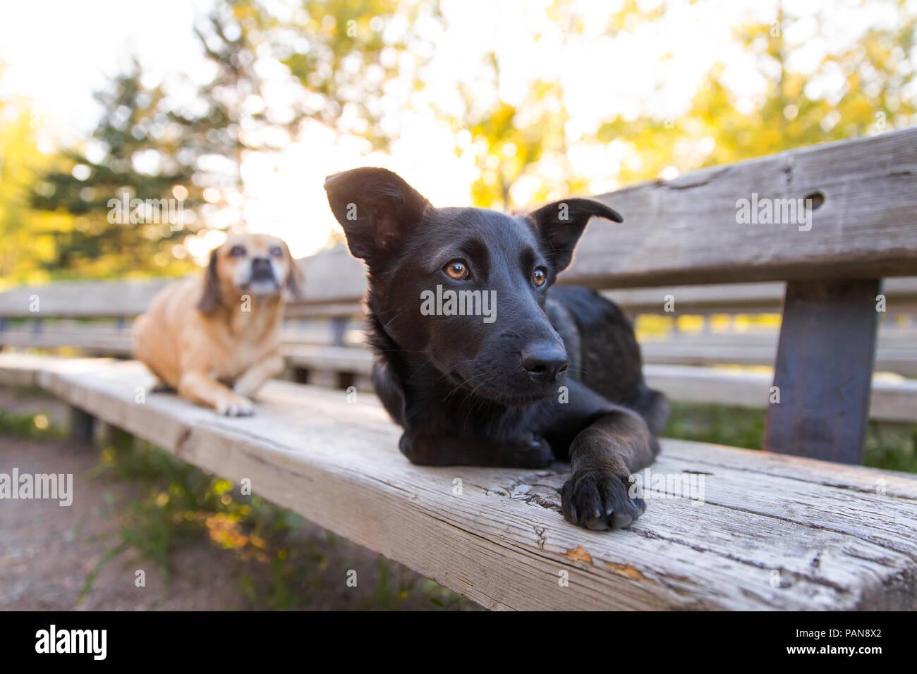 Dos perros sentando en el banco de madera en el parque Foto de stock