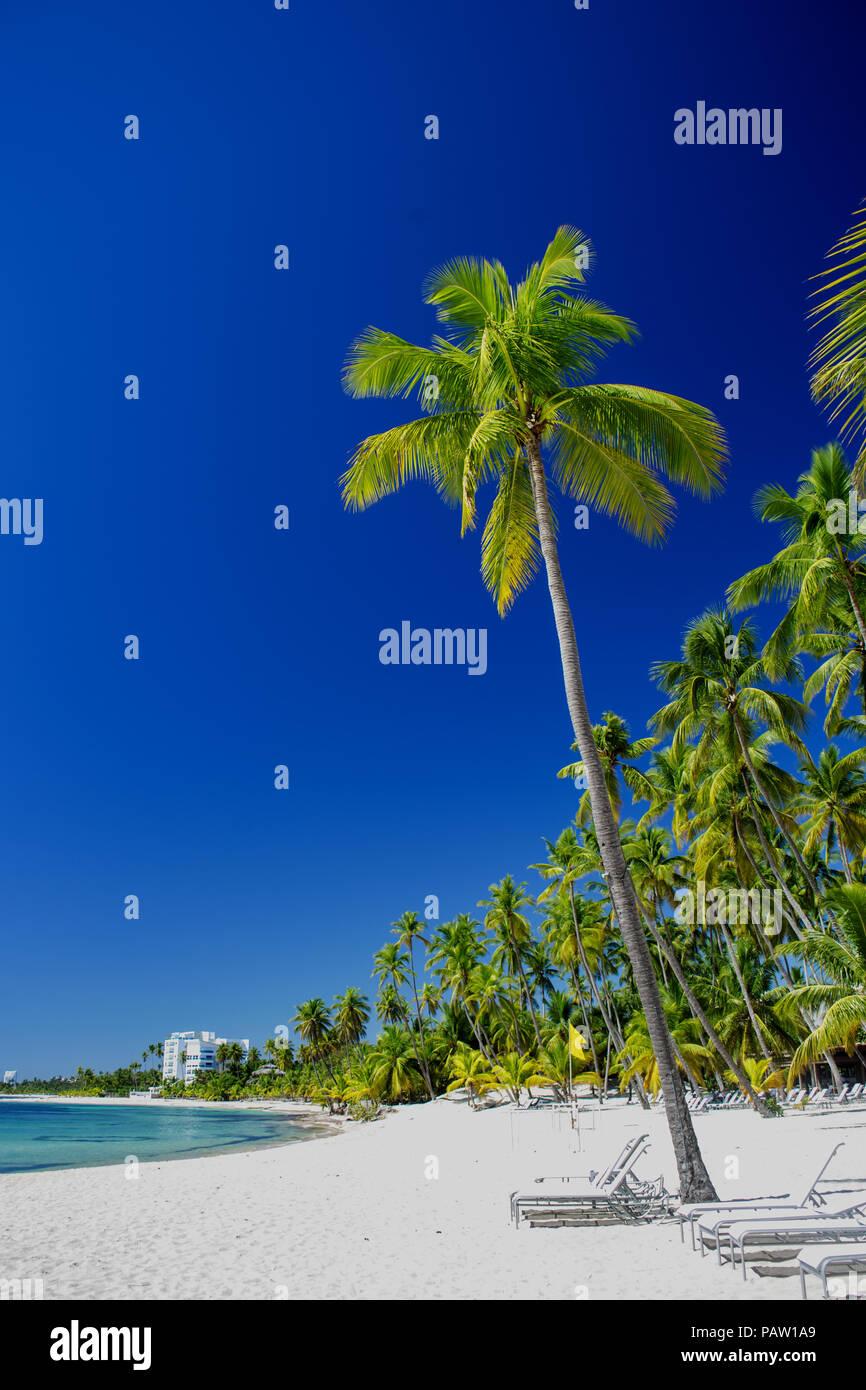 Playa de arena en el mar Caribe con altas palmeras, tumbonas. Boca Chika resort, República Dominicana Imagen De Stock