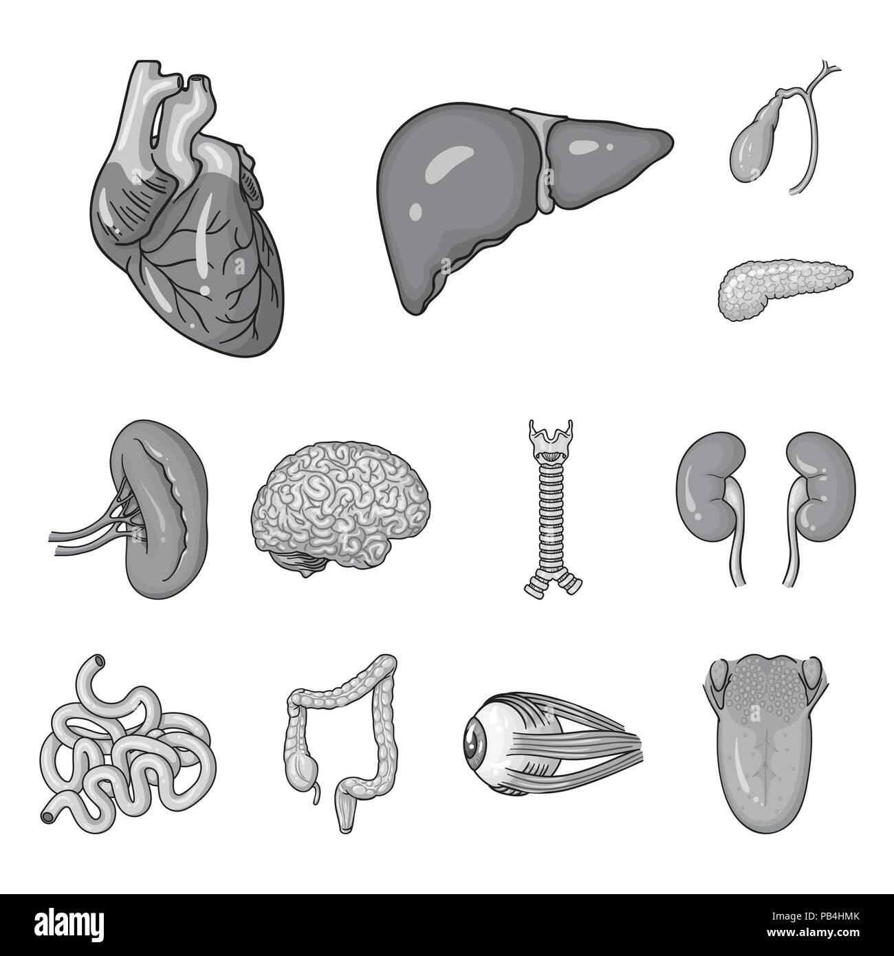 Órganos Humanos iconos monocromo en conjunto para el diseño ...