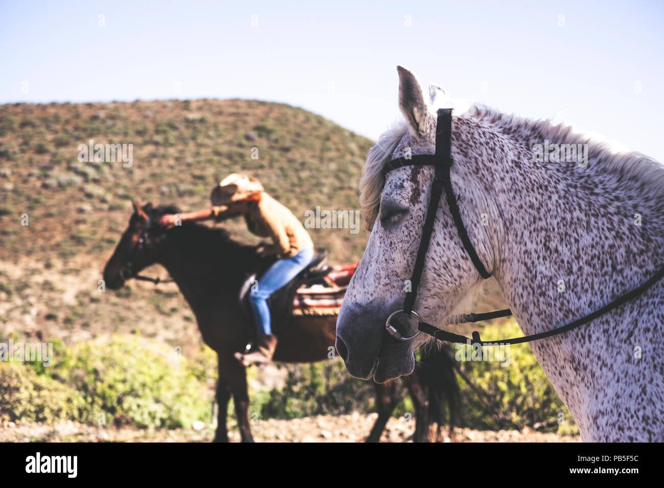 El caballo y el estilo de vida de los animales en la amistad con los seres humanos y personas. actividad de ocio al aire libre en las montañas Imagen De Stock