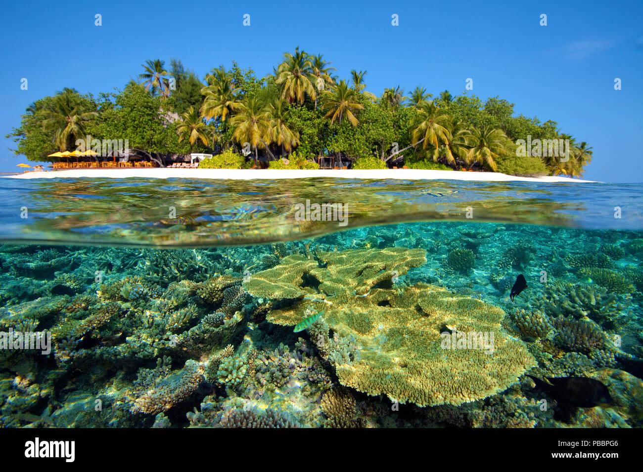 Arrecifes de coral en el Angsana Ihuru island (antiguo nombre de la isla), Split Image, North-Male Atoll, las islas Maldivas Foto de stock