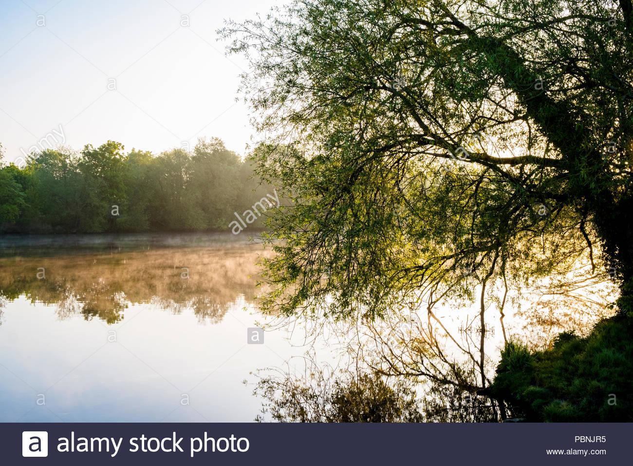 Paisajes Ingleses. Temprano en la mañana la niebla sobre el río Trent en la campiña de Nottinghamshire, Inglaterra, Reino Unido. Imagen De Stock