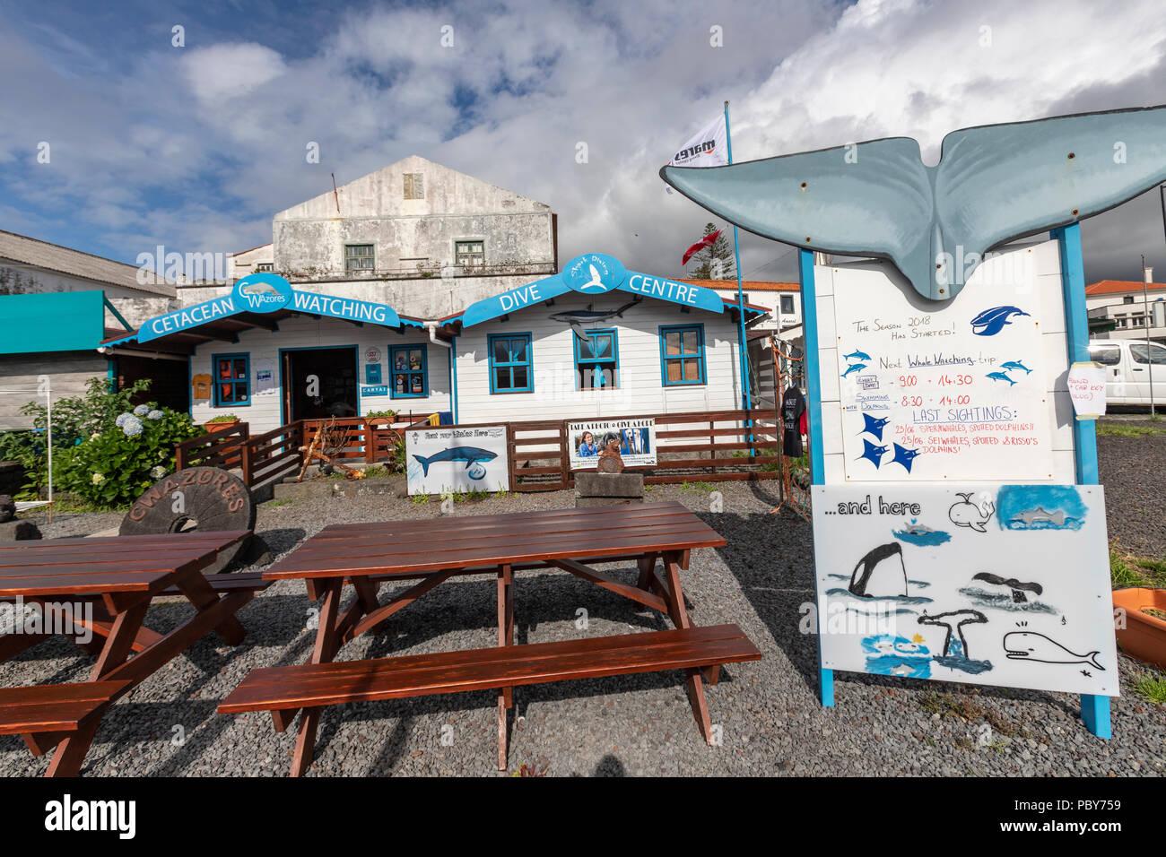 Ver cetáceos Madalena, centro de buceo en la isla de Pico, Azores, Portugal Foto de stock