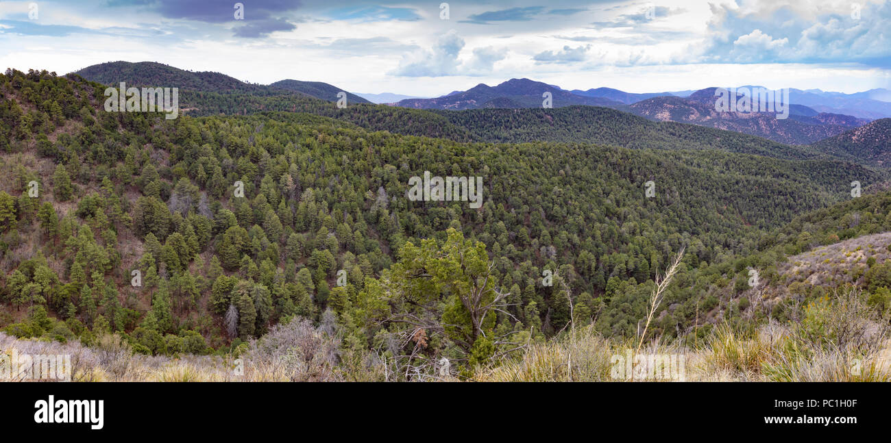 Apache, el Bosque Nacional Sitgreaves Greenleed Co., AZ Foto de stock