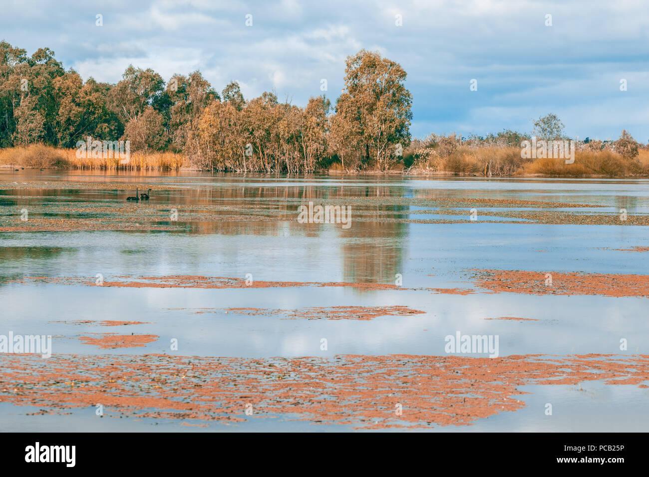Hermosa reserva natural sobre el río Murray en Banrock Station, Riverland, South Australia Imagen De Stock