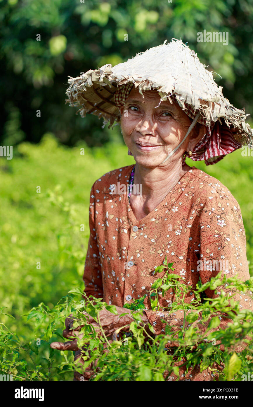 Mujer en un sombrero cónico chiles de cosecha en un campo en la zona rural de Kampot, Camboya, Indochina, en el sudeste de Asia, Asia Foto de stock