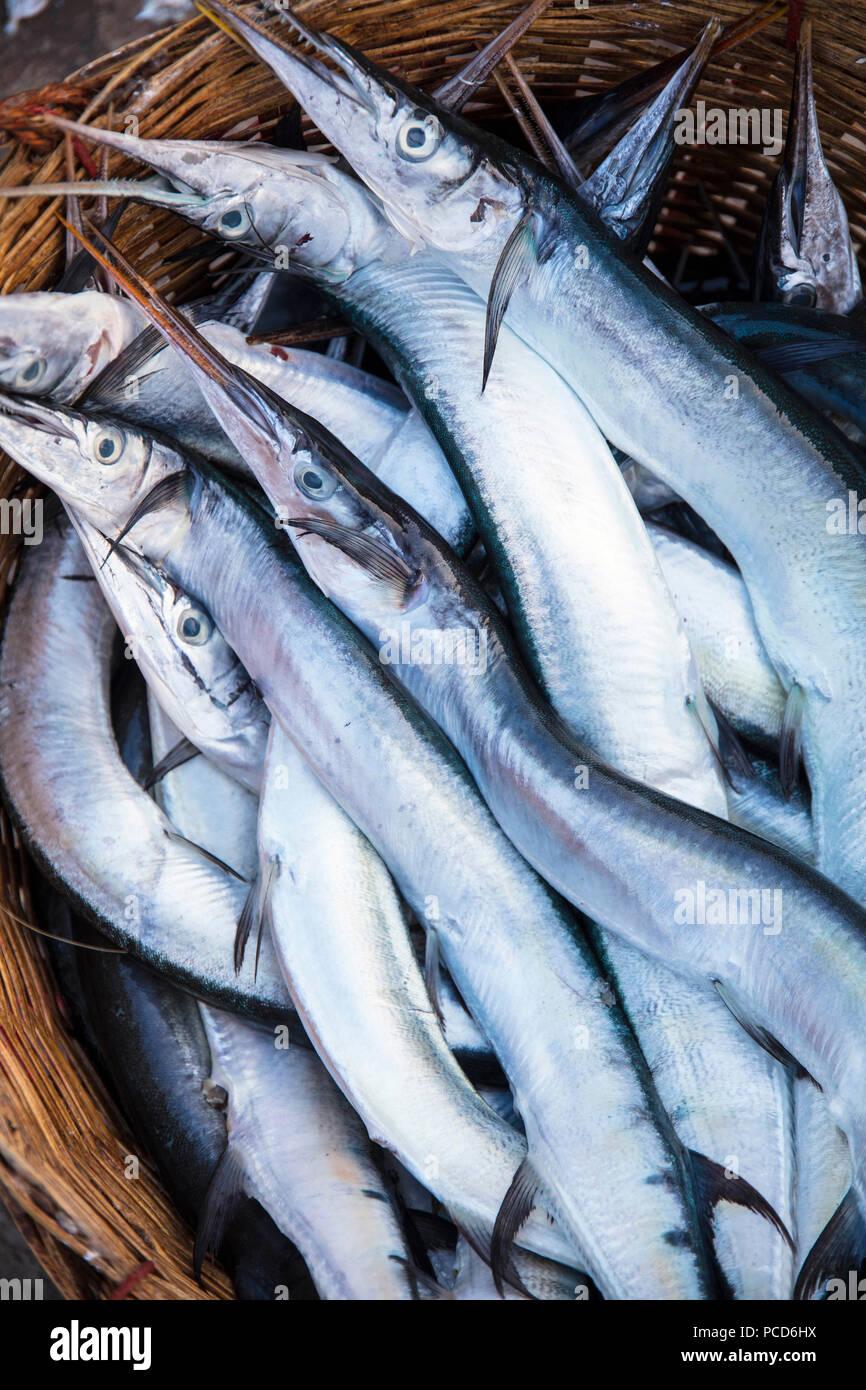 Needlefish (Belonidae sp.) en una cesta en la mañana mercado de pescado, en las orillas del río Chhu Preaek Tuek en Kampot town, Camboya Foto de stock
