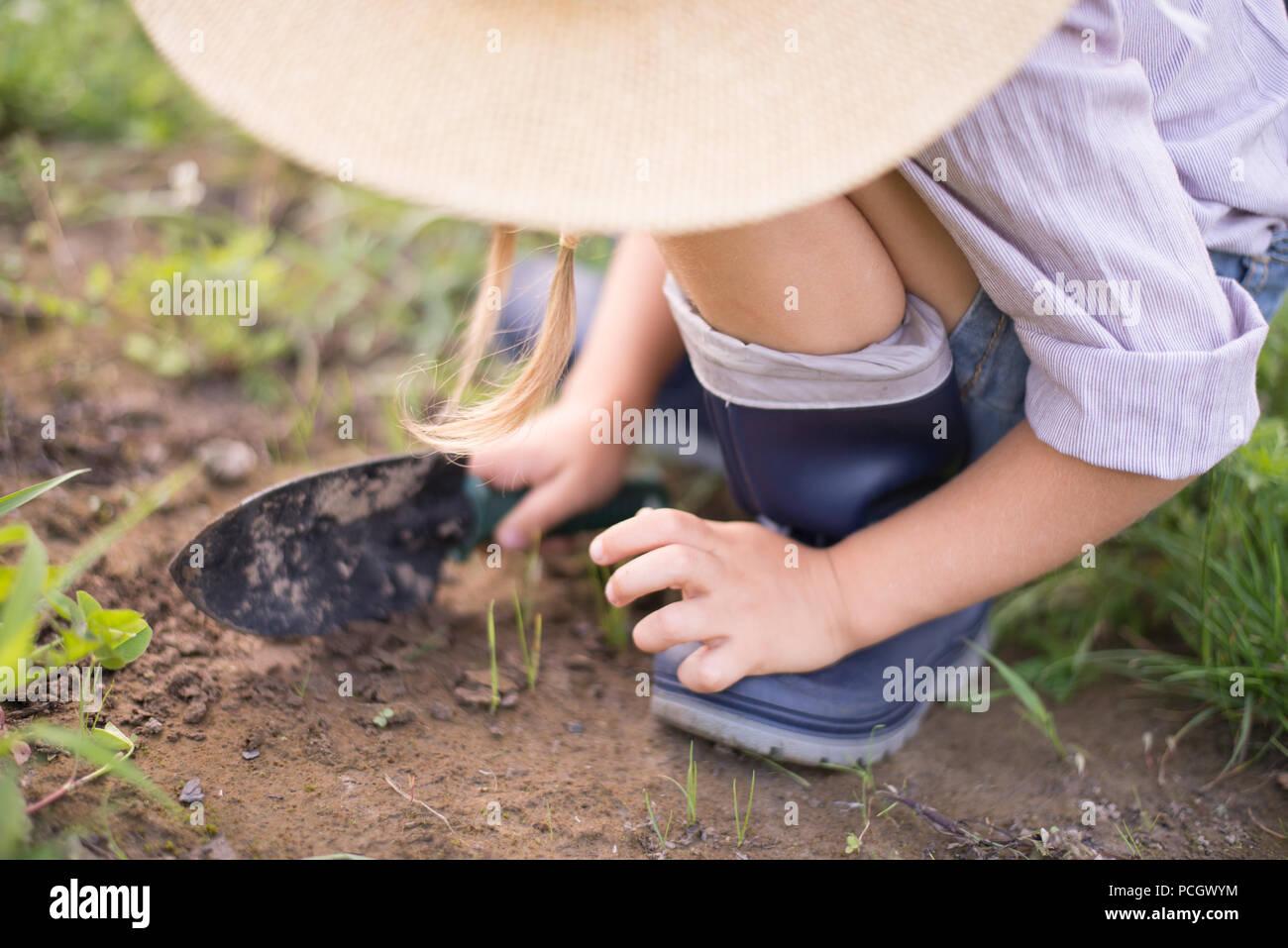 Chica tomate de cosecha durante el otoño la jardinería Foto de stock