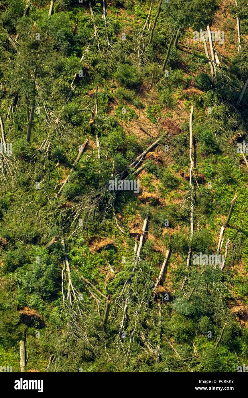 Schellenberg bosque, bosque de la ciudad de Essen y la zona alrededor del lago Baldeneysee fue la más afectada por la tormenta, el 9 de junio de 2014, los daños y las consecuencias de la tormenta, Essen, área de Ruhr, Renania del Norte-Westfalia, Alemania Imagen De Stock