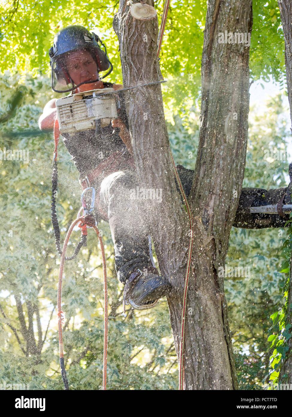 Arborist femenino con una motosierra hasta un árbol está recubierta con aserrín Imagen De Stock