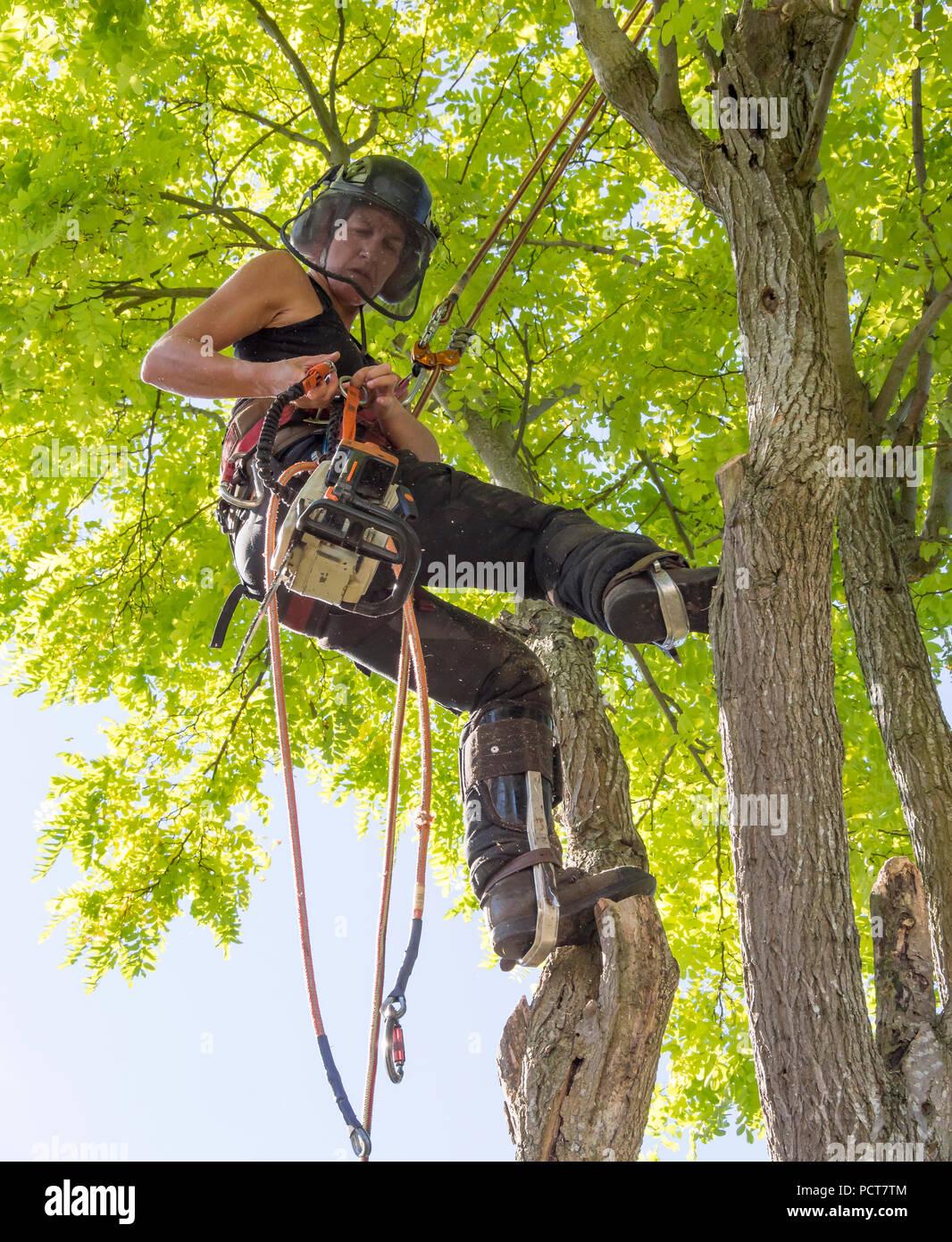 Arborist hembra listo para usar una motosierra Imagen De Stock