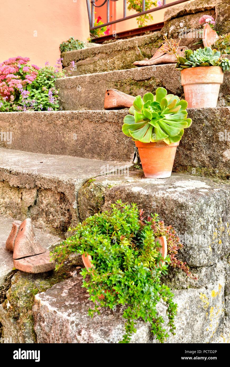 Plantas Suculentas, plantas verdes, Pot, escaleras, Idilio, Passau, Baja Baviera, Alemania Foto de stock
