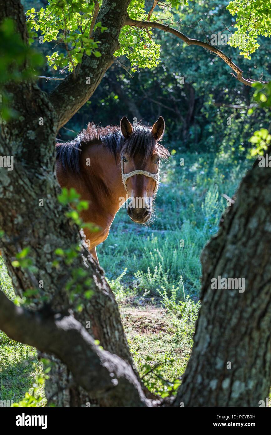 A Caballo en el bosque Imagen De Stock