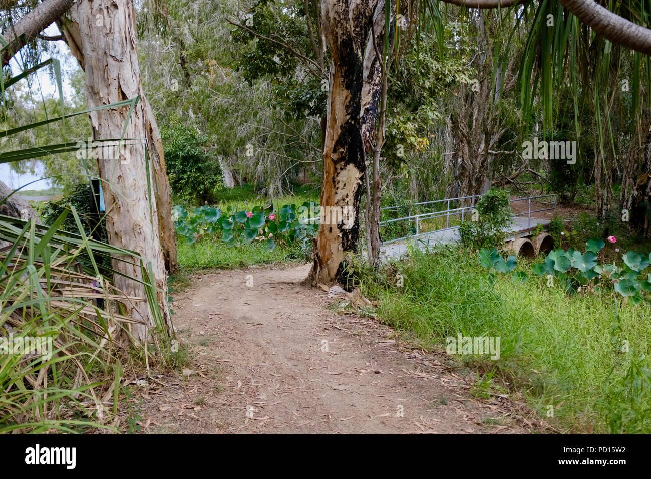 Un pequeño puente que cruza un río rama, Booroona sendero en el Ross River, Rasmussen QLD 4815, Australia Foto de stock