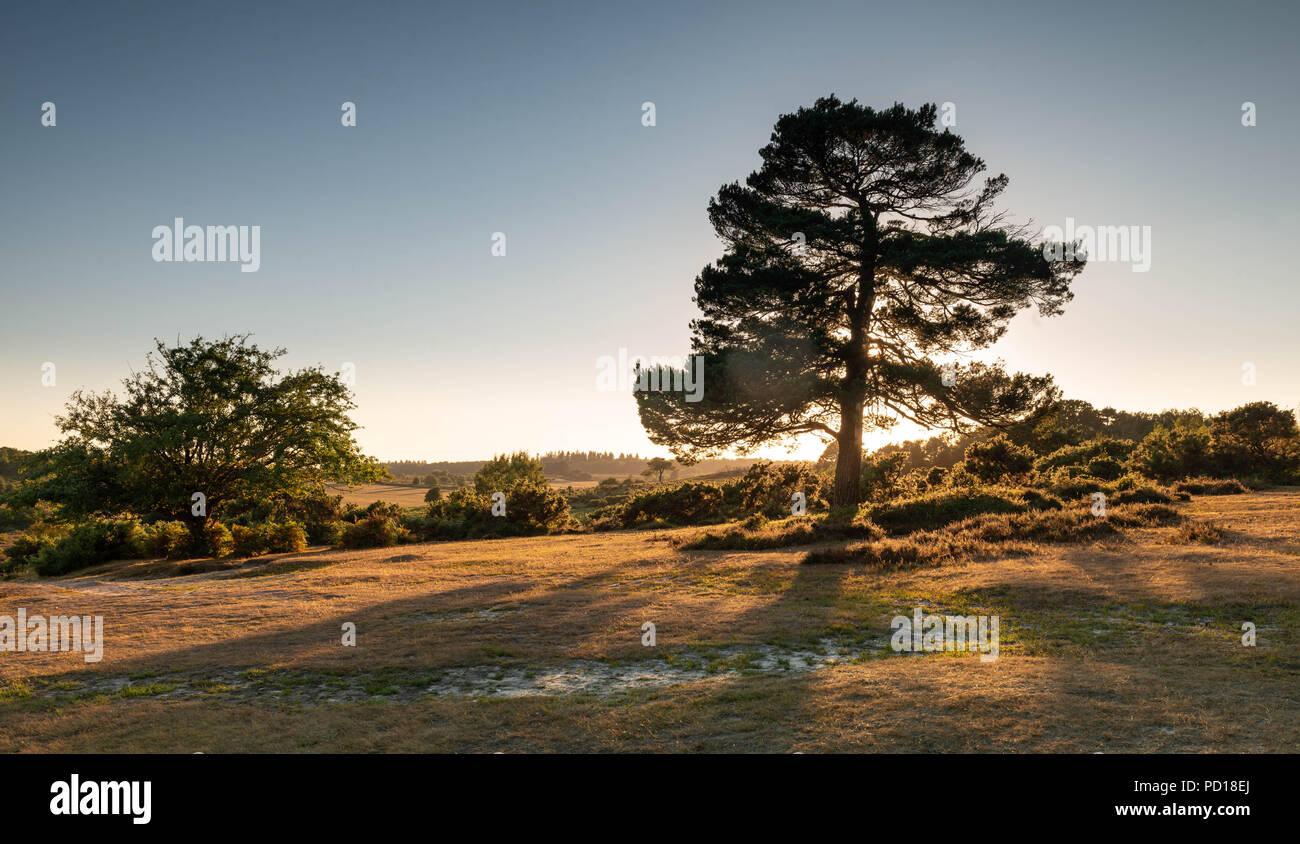El cálido sol brilla es la última luz del día en el hermoso Parque Nacional de New Forest cerca de Brockenhurst, Hampshire, Reino Unido Foto de stock