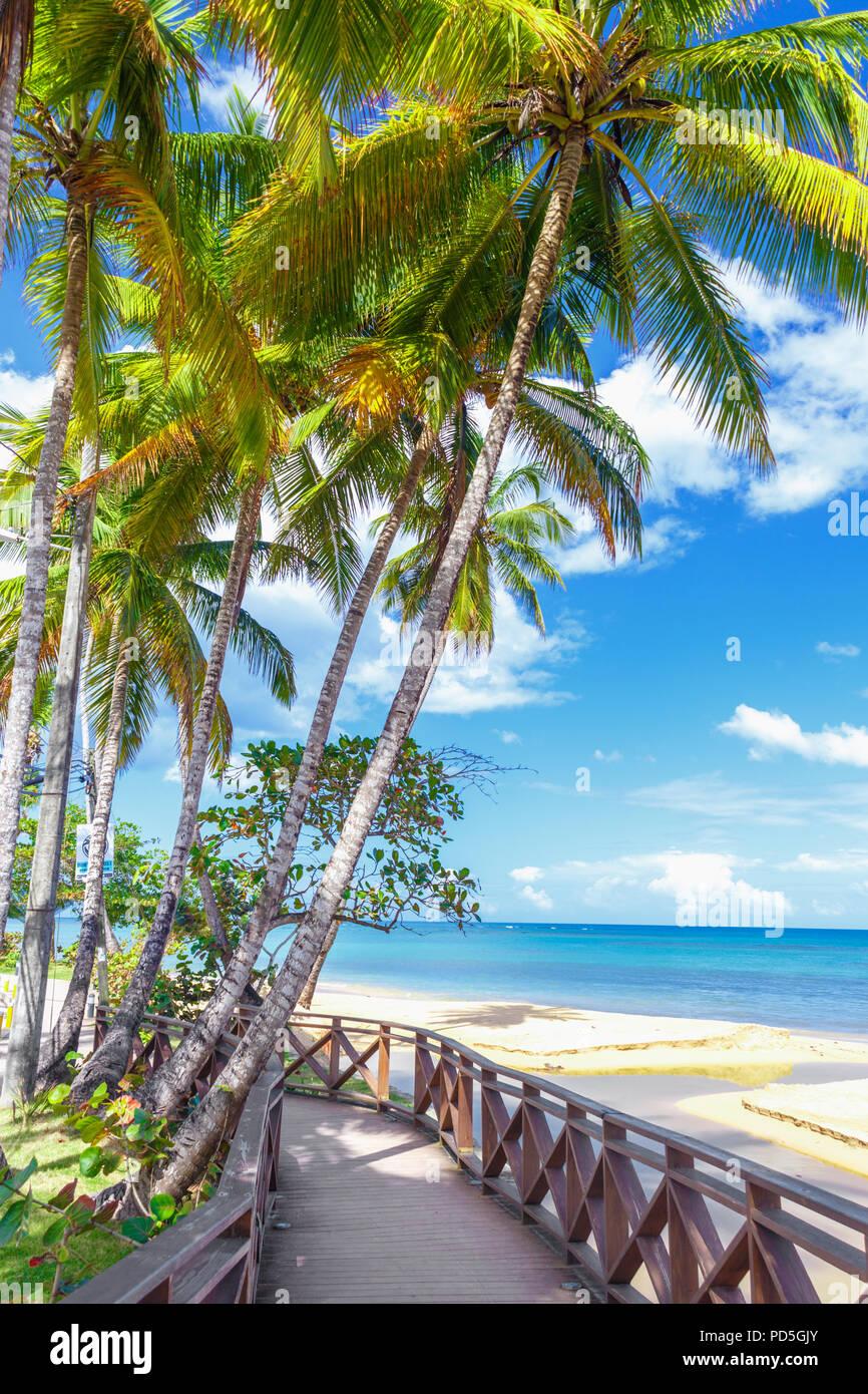 El Boardwalk bajo las palmeras en la playa tropical Imagen De Stock