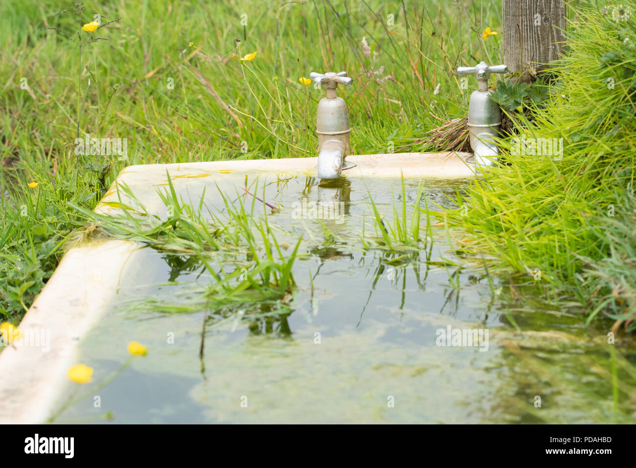 Baño fuera utilizado como un ganado comedero de agua - Escocia, Reino Unido Imagen De Stock