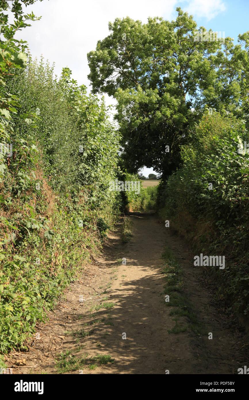 Camino antiguo que data de la edad media que se ejecuta a través de cinturón  verde e23245cc3df9