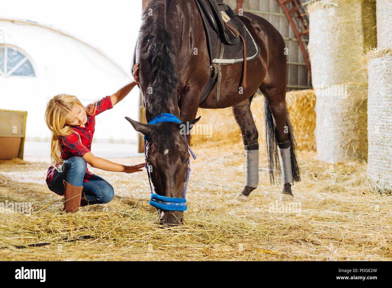 Cowboy emocional chica acariciándole hermoso caballo oscuro Imagen De Stock