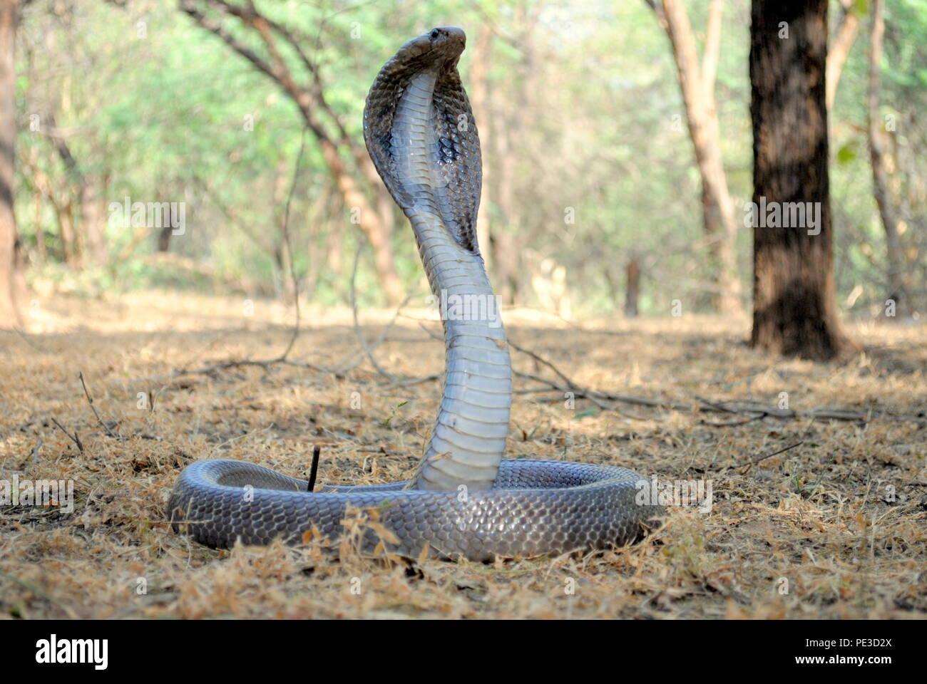 Los Reptiles en la naturaleza Foto de stock