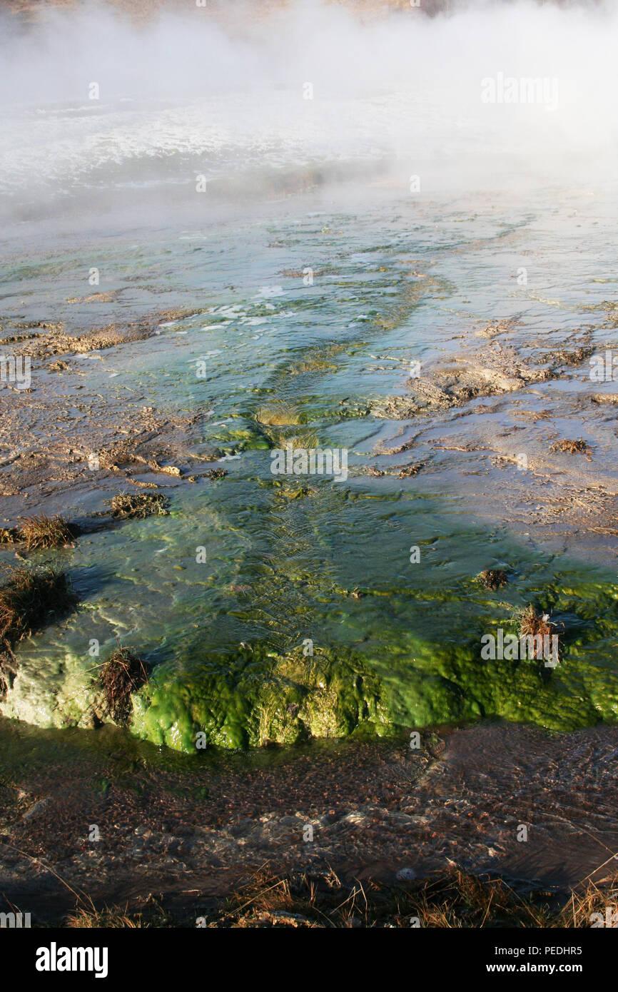 Las algas en Hot Springs, el Gran Geysir, Islandia Foto de stock