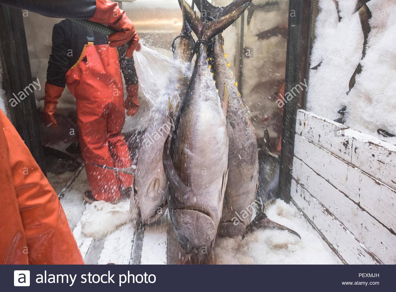 Limpieza de los pescadores pescar en barco de pesca de la perca plateada, San Diego, California, EE.UU. Imagen De Stock