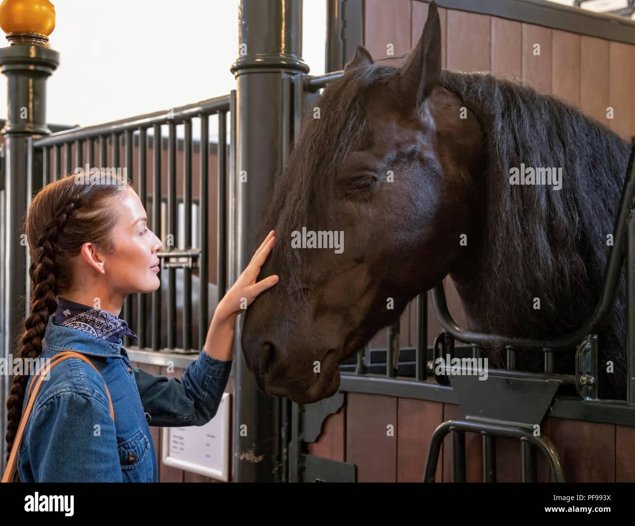 Visitante acariciando un Friesian caballo en los Establos Reales, La Haya, Holanda Meridional, Países Bajos, abierto al público el 17 de agosto de 2018. Imagen De Stock