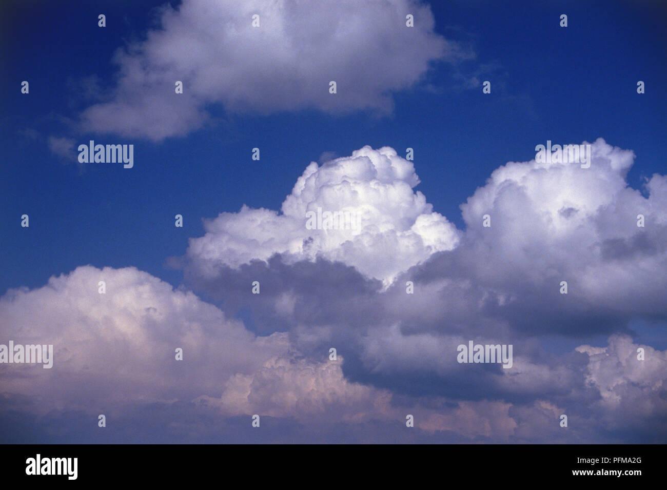 Cumulus congestus, Large white clouds de germinación, de gran extensión vertical, abultadas piezas superiores tienen forma de coliflor, en el cielo azul profundo. Foto de stock