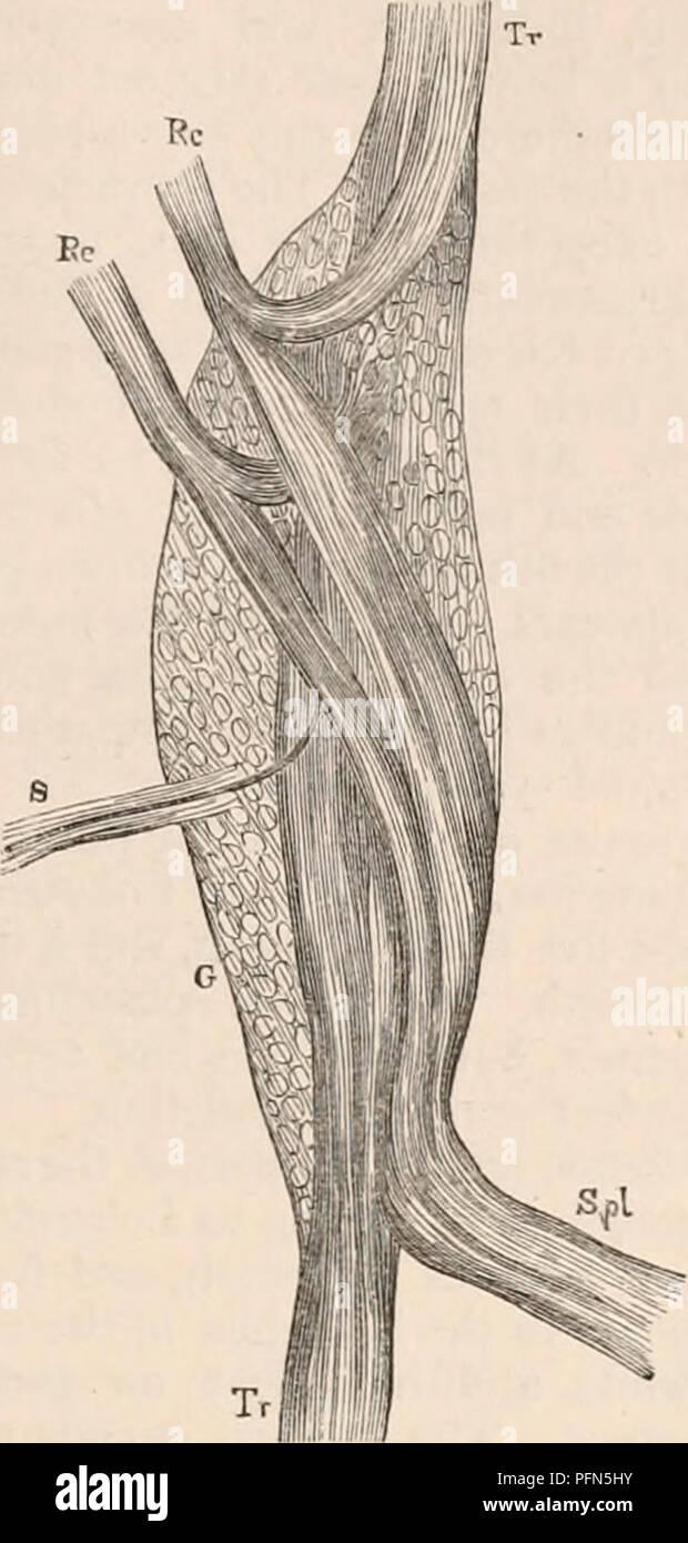 Cervical Ganglion Imágenes De Stock & Cervical Ganglion Fotos De ...