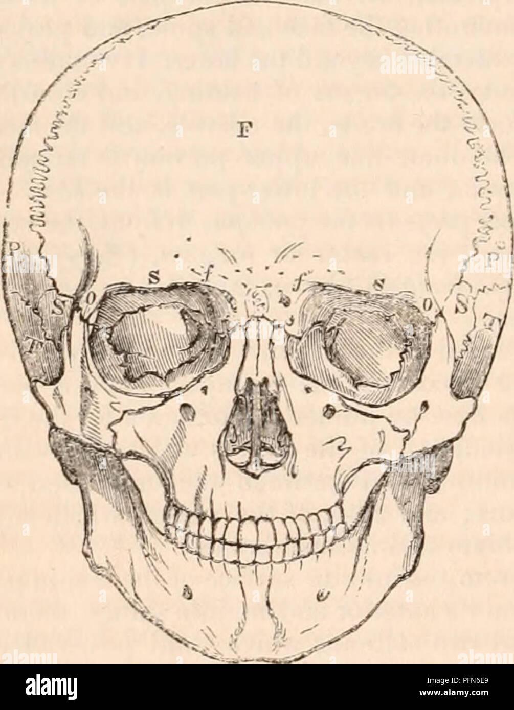 Lujoso Cráneo Anatomía Forámenes De Base Regalo - Imágenes de ...