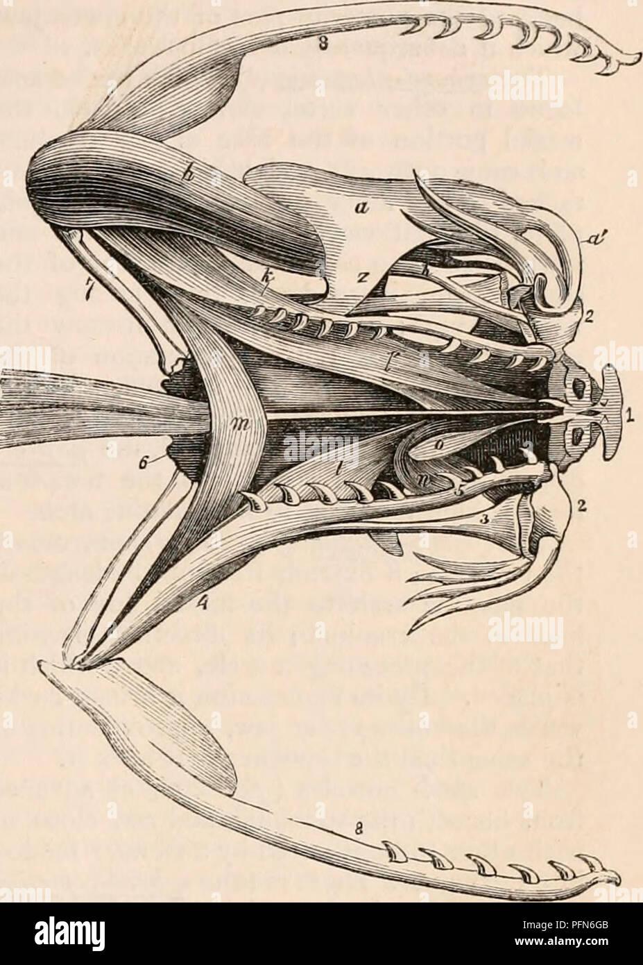 La cyclopaedia de anatomía y fisiología. Anatomía; fisiología ...