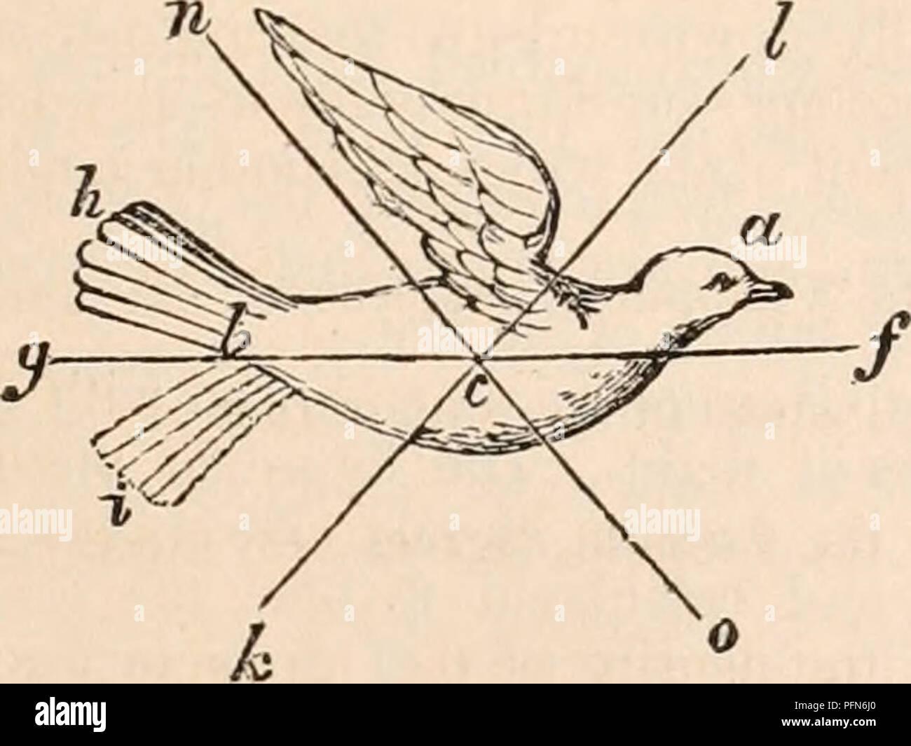 Prevent Pigeons Imágenes De Stock & Prevent Pigeons Fotos De Stock ...