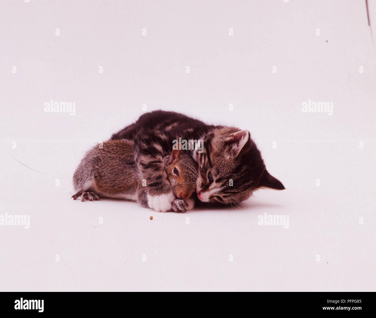 Gatito y ardilla jugando juntos Foto de stock