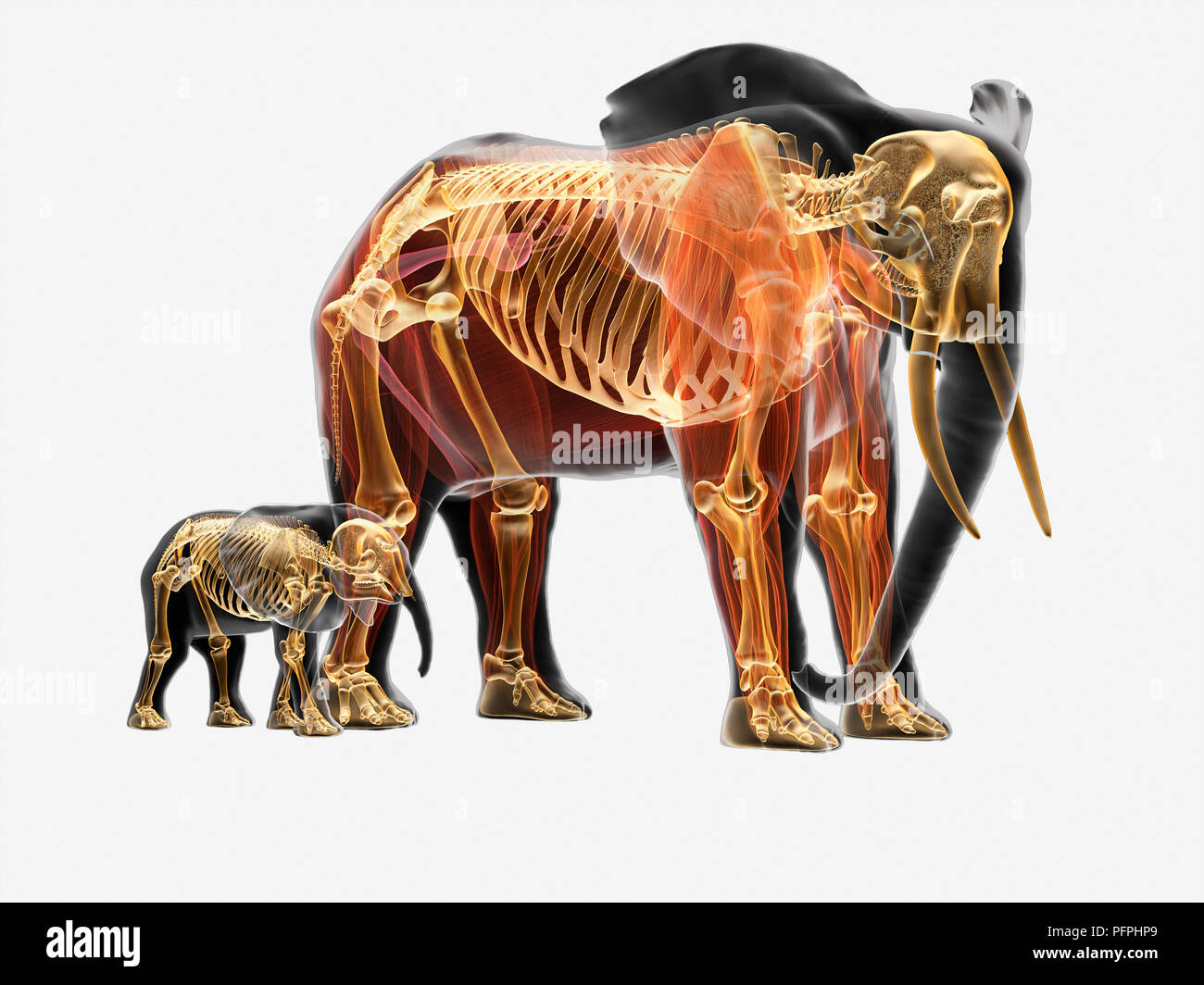 Elephant Illustration Imágenes De Stock & Elephant Illustration ...