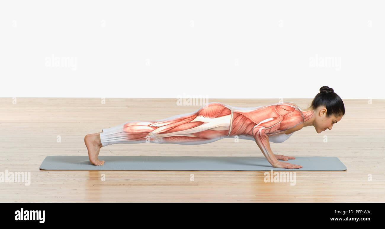 Estructura muscular superpuesta en el cuerpo de la mujer haciendo push-ups en colchoneta de ejercicios, vista lateral Imagen De Stock