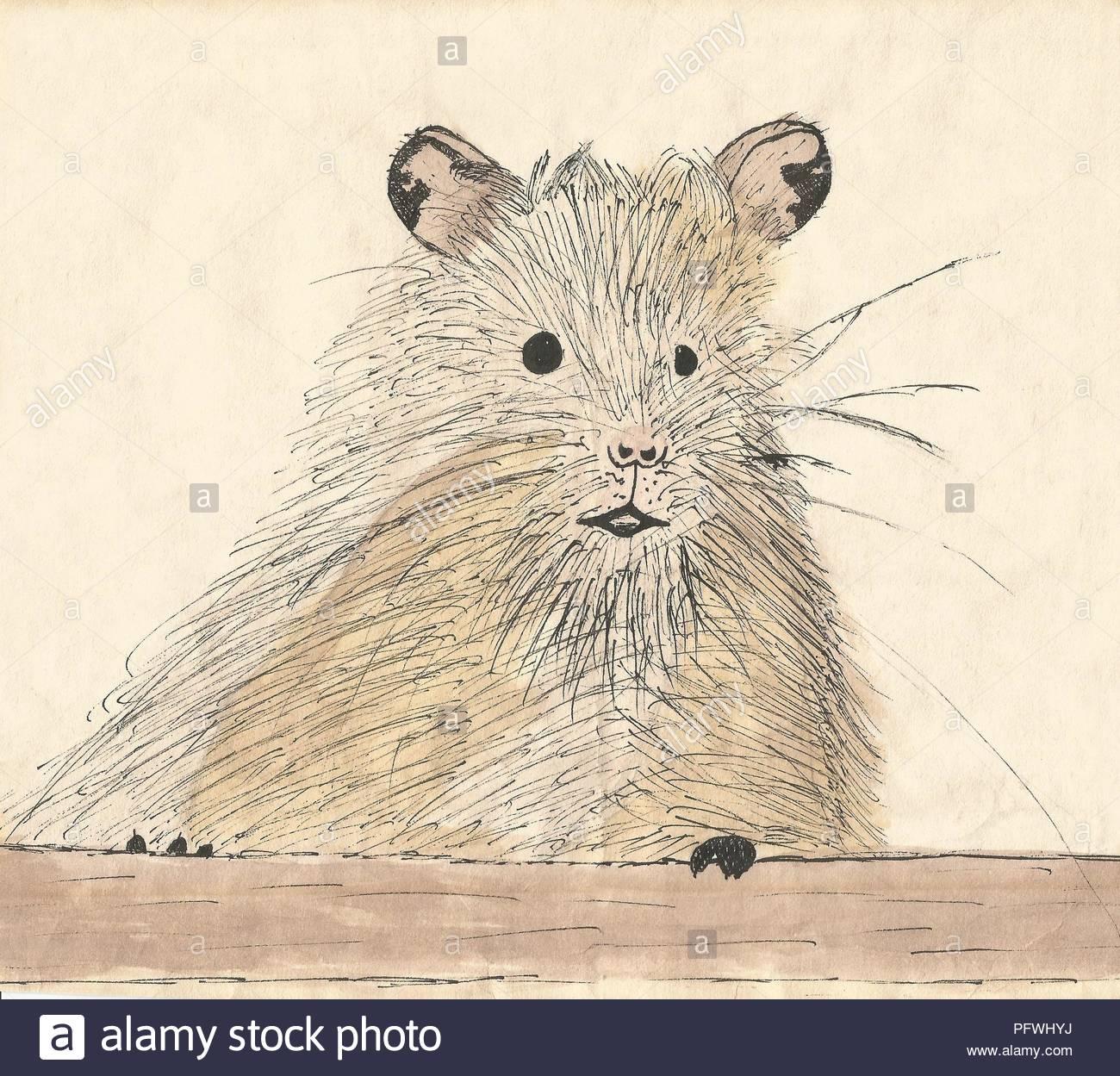 Animal Drawing Imágenes De Stock & Animal Drawing Fotos De Stock - Alamy
