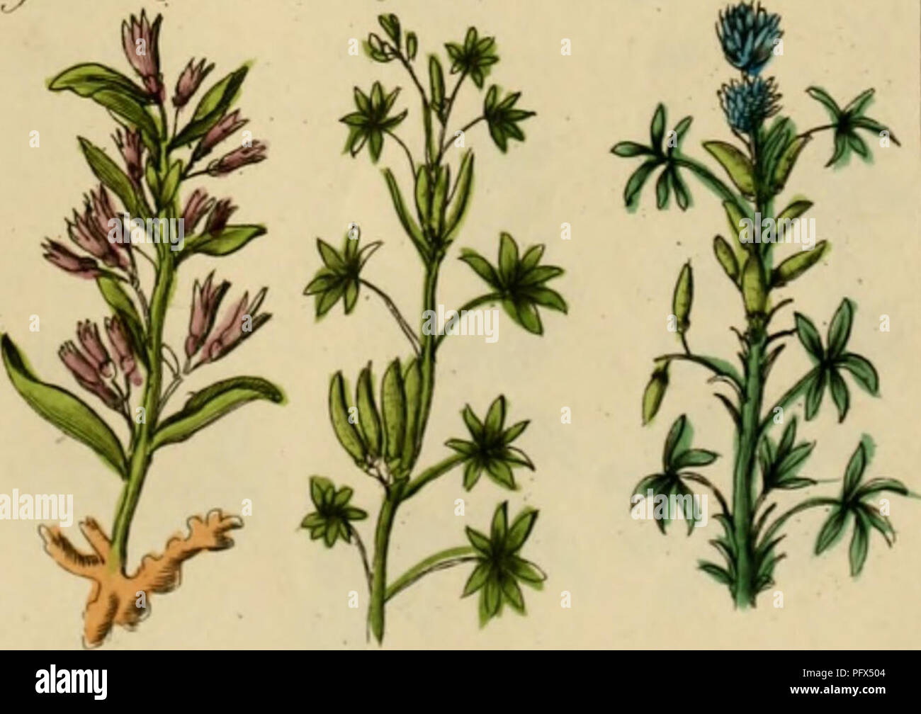 """. Culpepper's médico inglés ; y complete herbal. La botánica médica; Materia Medica, hortalizas; Materia Medica; Botánica; plantas medicinales. Zirif/niTftt (irrn""""/,rii7ij. Lnlit-ti iinq Trrt, r.J^/rtti-> (r m"""" Ij il/litif . I.:ifll Jljiif'i. Por favor tenga en cuenta que estas imágenes son extraídas de la página escaneada imágenes que podrían haber sido mejoradas digitalmente para mejorar la legibilidad, la coloración y el aspecto de estas ilustraciones pueden no parecerse perfectamente a la obra original. Culpeper, Nicholas, 1616-1654; Sibley, Ebenezer, 1751-1800. Londres: Impreso por el autor, y se vende en el British Direct Foto de stock"""