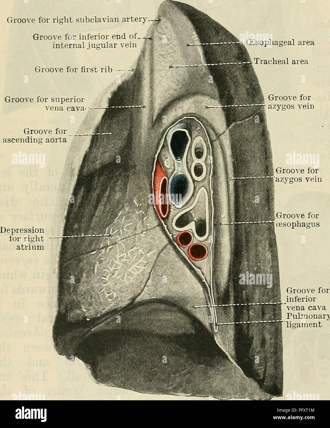 Lower Abdominal Aorta Imágenes De Stock & Lower Abdominal Aorta ...