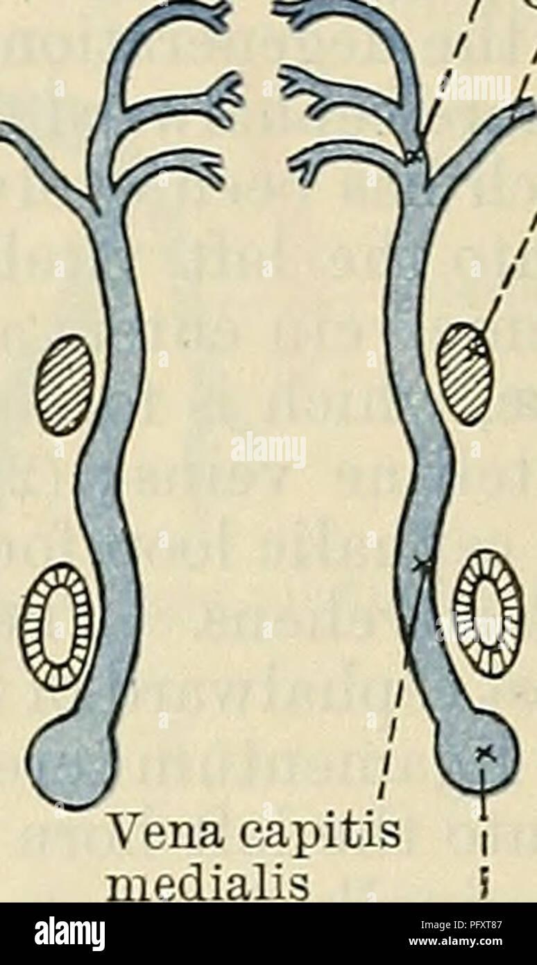 Cerebral Veins Imágenes De Stock & Cerebral Veins Fotos De Stock - Alamy