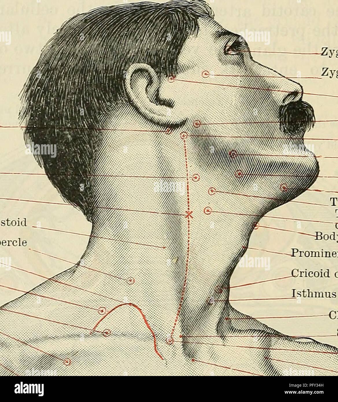Temporal Artery Imágenes De Stock & Temporal Artery Fotos De Stock ...