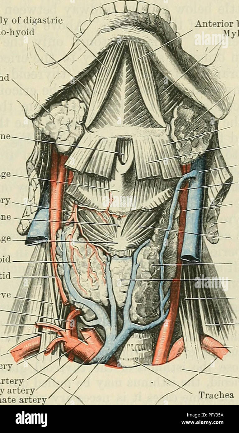 Encantador Anatomía Y Fisiología Ncti Foto - Anatomía y Fisiología ...