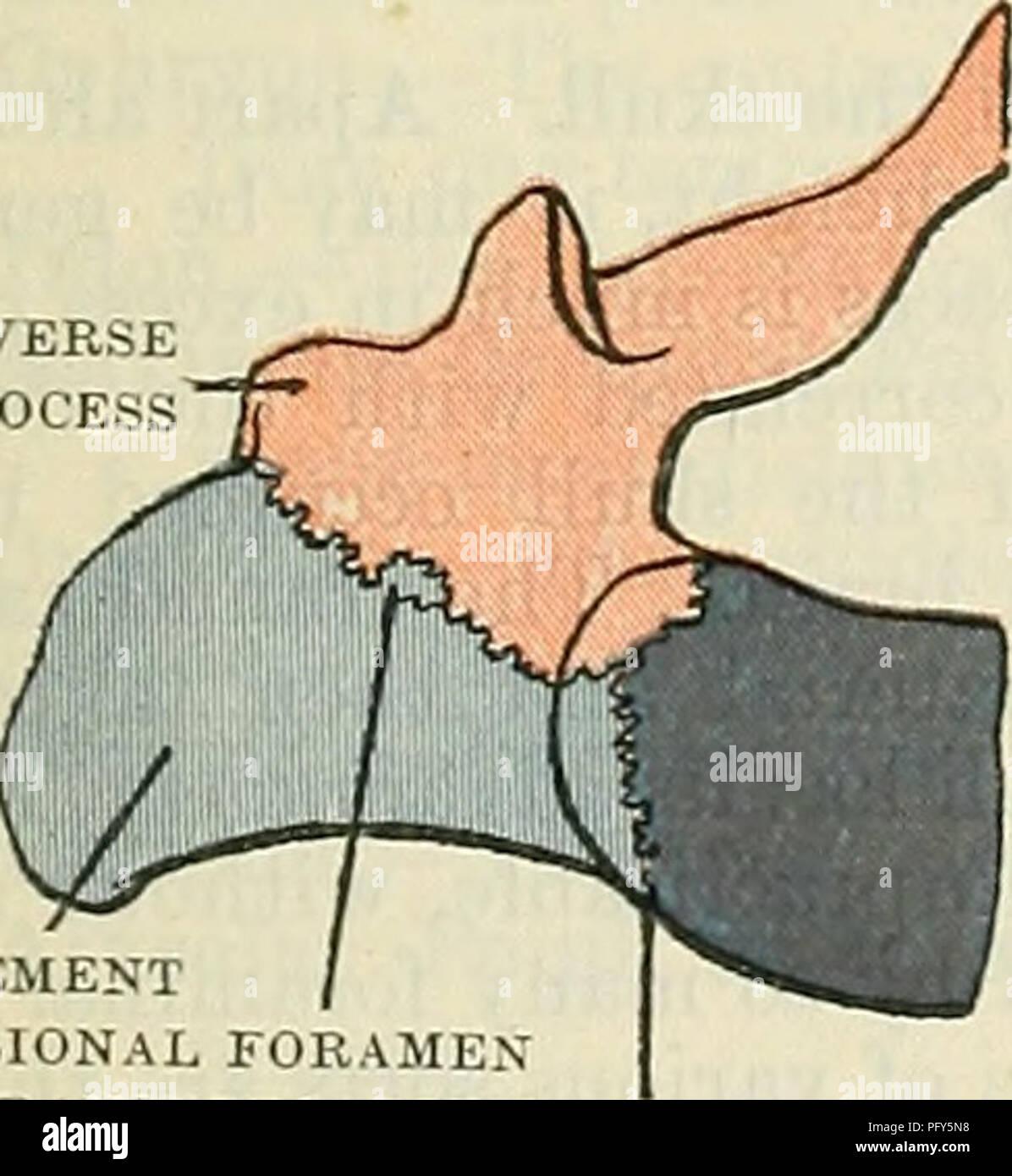 Cunningham de libro de texto de anatomía. Anatomía. El proceso ...